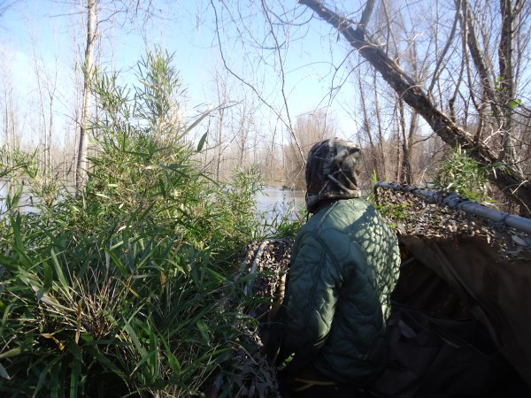 Duck Hunting the lower Mississippi River | Page 5 | Refuge