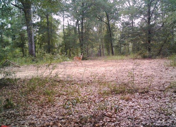 Deer teamwork2.jpg