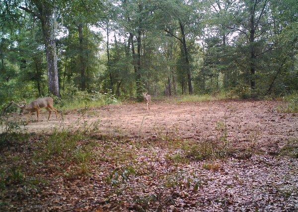 Deer teamwork3.jpg
