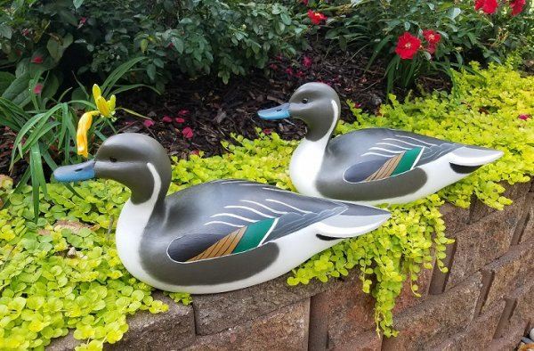 finished pintails.jpg