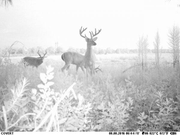 Foggy Bucks - Copy.jpg