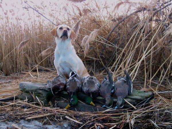 hunting 425.jpg