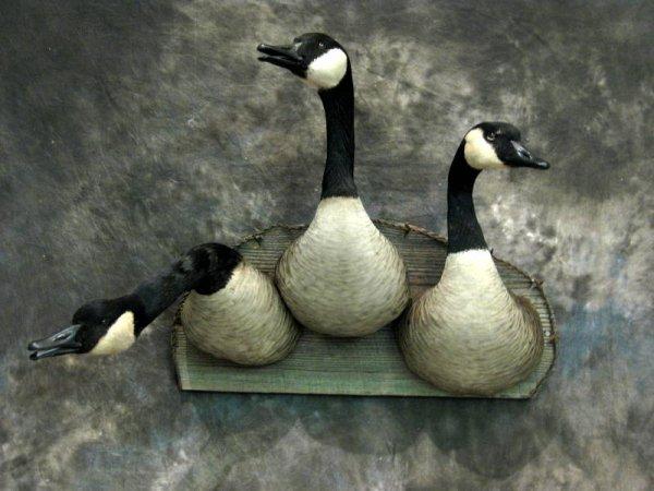 canada goose 9519m