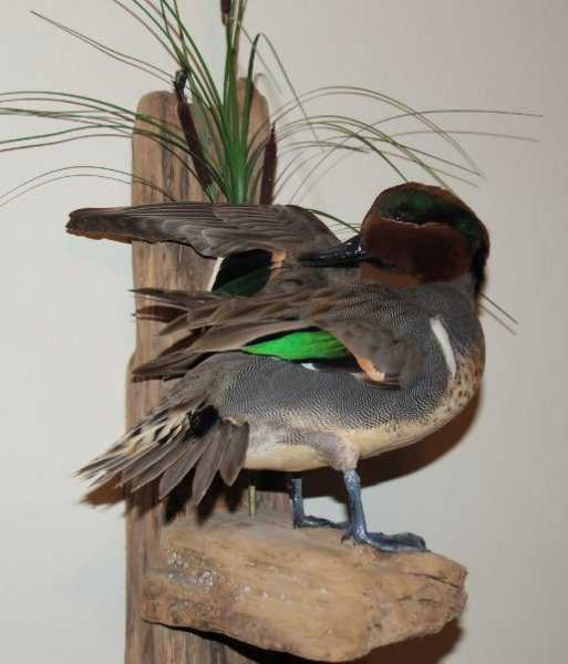 january green wing.jpg