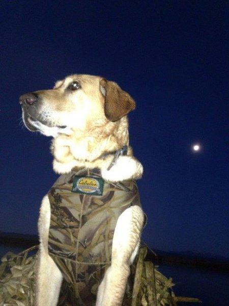 Moon light on a duck blind.jpg