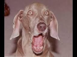 OMG Dog copy.jpg