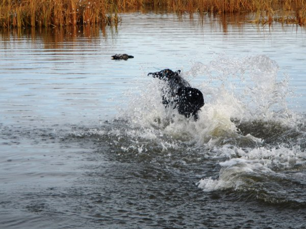 Ozzy Retrieve 1_112517.JPG