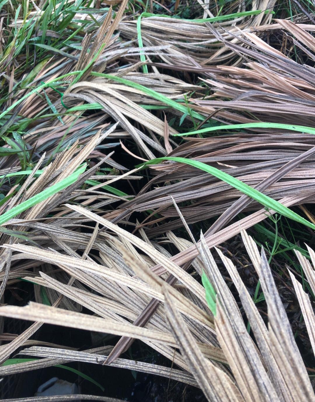 pit blind grass2.jpg
