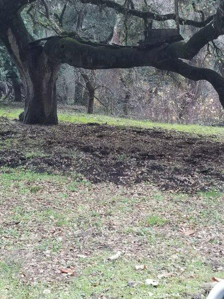 Rooted Acorns.jpeg