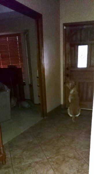 Roscoe waiting at door.JPG