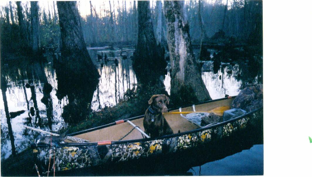 Wood duck canoe.JPG