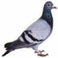 refuge birddawg